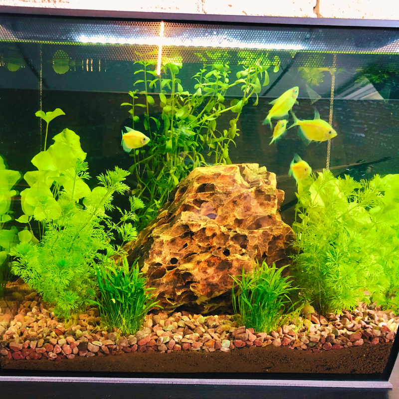 AdEasy Fishtank